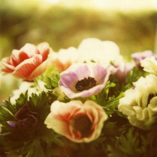 Ella Sverdlov Etsy Photographer Photography Polaroid Impossibke Project Beauty Peony Anemone Roses Teacup Spoon Floral Vintage Nostalgia