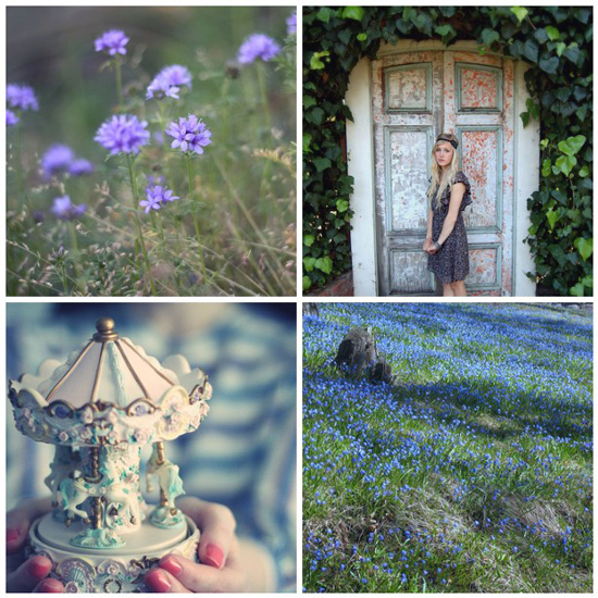 Mosaic Blue Fields Photography Flowers Cornflower Violet Carousel Flickr Photo Pretty Design Fashion Girl